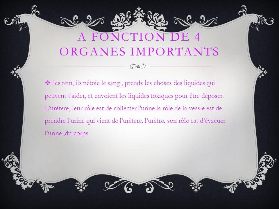 A FONCTION DE 4 ORGANES IMPORTANTS les rein, ils nétoie le sang, prends les choses des liquides qui peuvent taider, et envoient les liquides toxiques