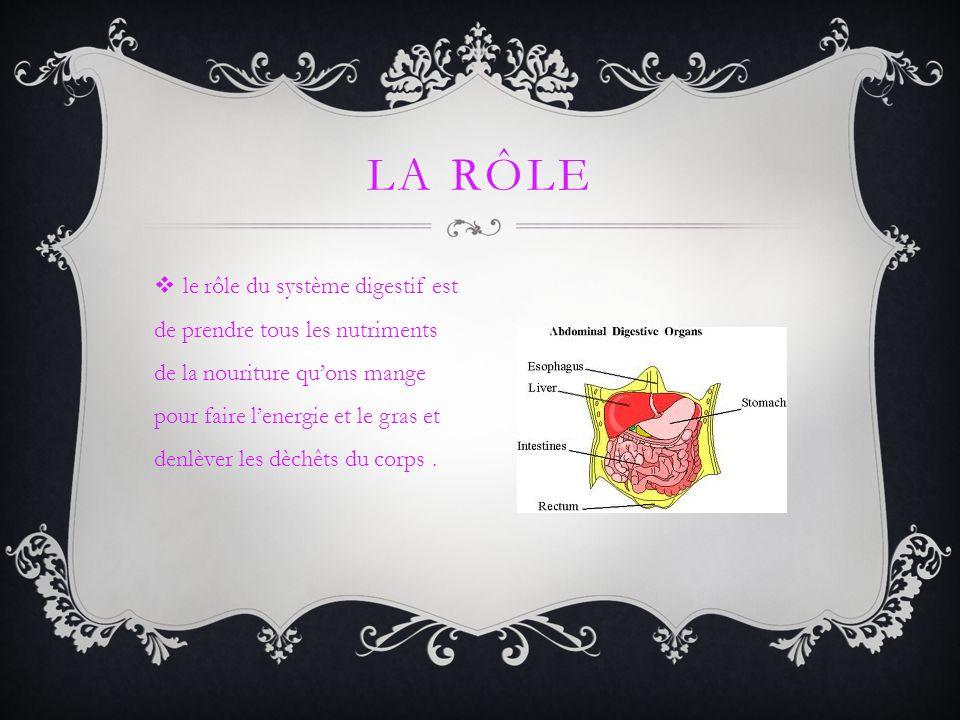 le rôle du système digestif est de prendre tous les nutriments de la nouriture quons mange pour faire lenergie et le gras et denlèver les dèchêts du c
