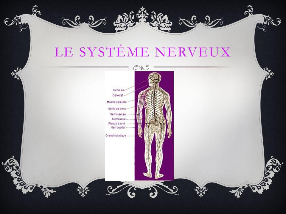 Le système nerveux est le système principal delà communication dans ton corps.