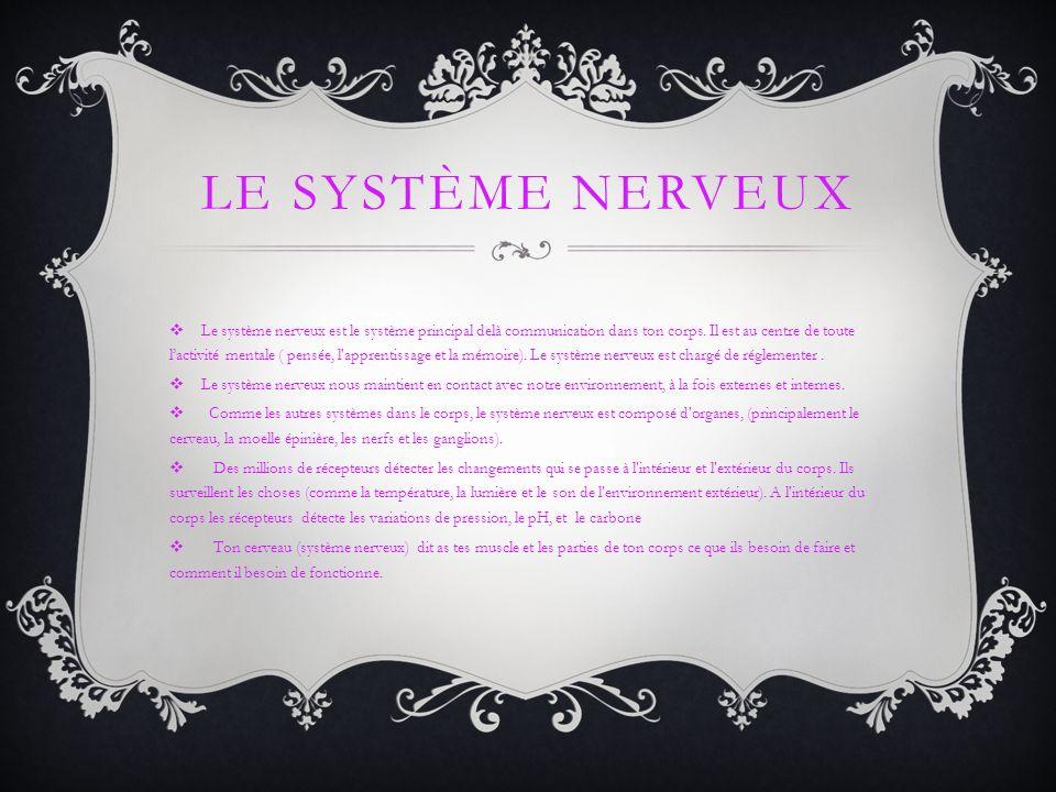 LE SYSTÈME NERVEUX Les neurones courir partout dans votre corps.