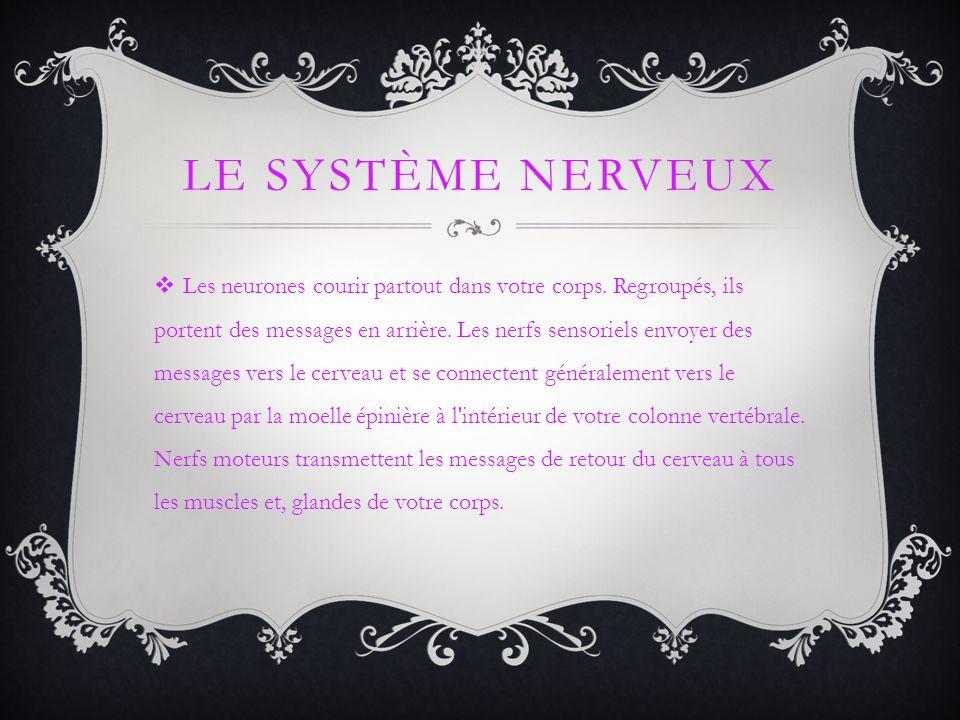 LE SYSTÈME NERVEUX Les neurones courir partout dans votre corps. Regroupés, ils portent des messages en arrière. Les nerfs sensoriels envoyer des mess