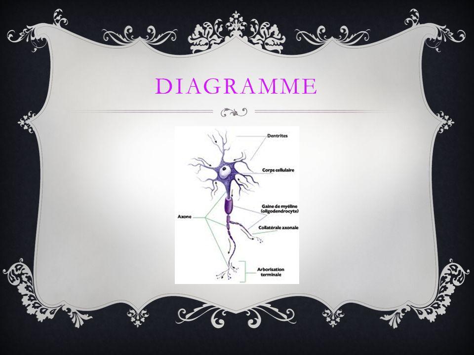 SEP La SEP est une maladie du système nerveux central, cest la destruction auto-immune et des problèmes de myéline.