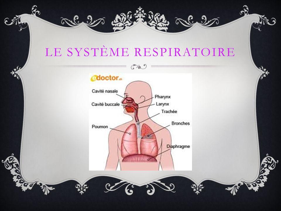 La fonction du système respiratoire est de fournir l oxygène au sang.