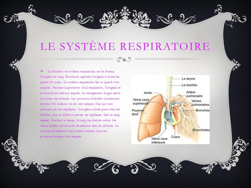 La fonction du système respiratoire est de fournir l'oxygène au sang. Ensuite ils apporte l'oxygène à toutes les parties du corps. Le système respirat