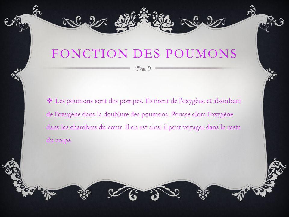 FONCTION DES POUMONS Les poumons sont des pompes. Ils tirent de l'oxygène et absorbent de l'oxygène dans la doublure des poumons. Pousse alors l'oxygè