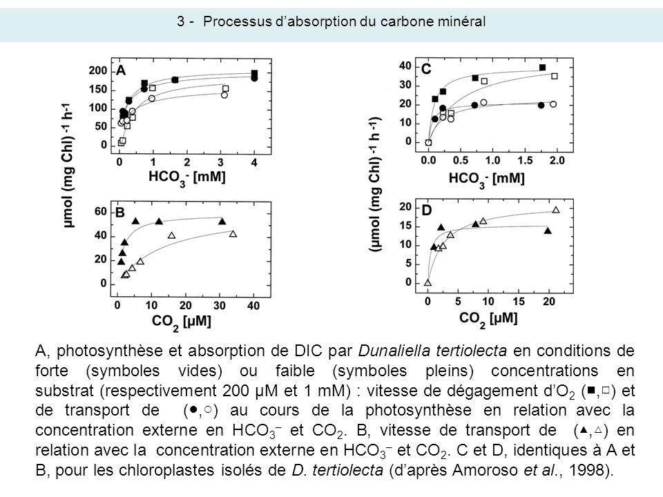 3 -Processus dabsorption du carbone minéral A, photosynthèse et absorption de DIC par Dunaliella tertiolecta en conditions de forte (symboles vides) o