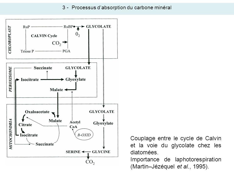 3 -Processus dabsorption du carbone minéral Couplage entre le cycle de Calvin et la voie du glycolate chez les diatomées. Importance de laphotorespira