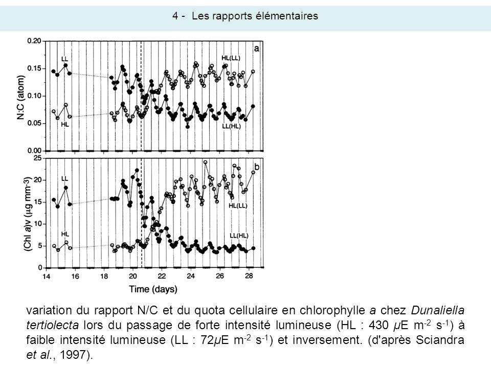 variation du rapport N/C et du quota cellulaire en chlorophylle a chez Dunaliella tertiolecta lors du passage de forte intensité lumineuse (HL : 430 µ