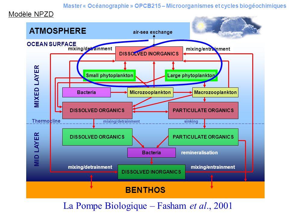 Master « Océanographie » OPCB215 – Microorganismes et cycles biogéochimiques Production primaire annuelle brute des océans : 60 Gt C an -1 Les diatomées : environ la moitié Le picoplancton : envrion le quart Le reste est partagé entre plusieurs groupes taxonomiques Les divers intervenants de lécosystème océanique global sont considérés par locéanographie actuelle comme des groupes fonctionnels encore appelés des groupes-clés.