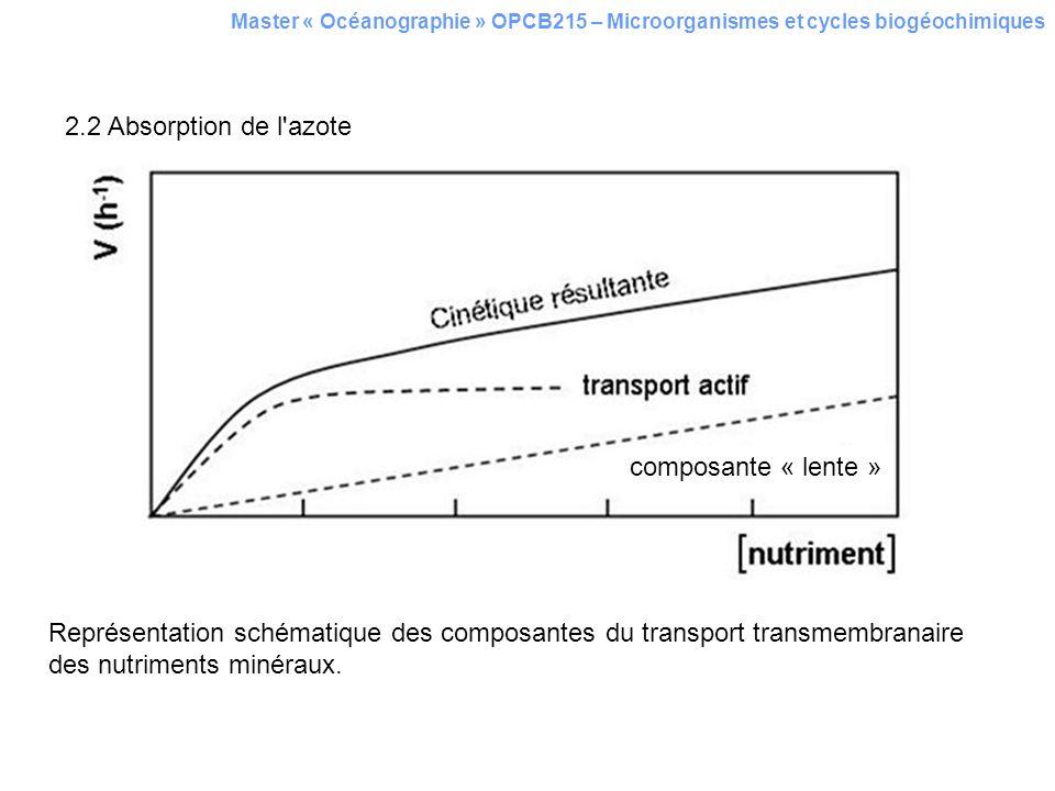 Master « Océanographie » OPCB215 – Microorganismes et cycles biogéochimiques 2.2 Absorption de l'azote composante « lente » Représentation schématique