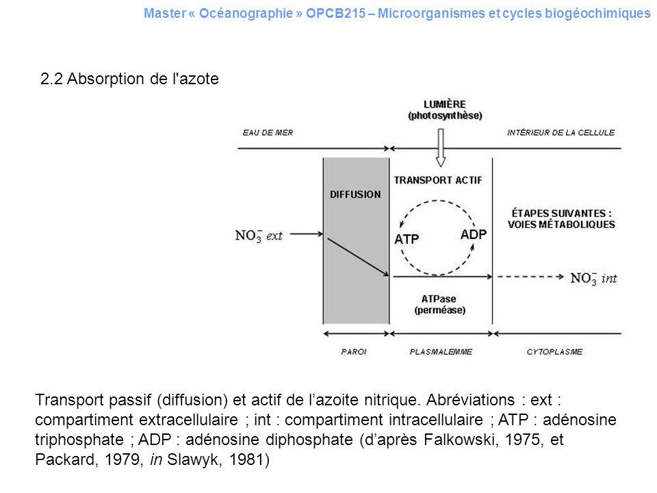 Master « Océanographie » OPCB215 – Microorganismes et cycles biogéochimiques 2.2 Absorption de l'azote Transport passif (diffusion) et actif de lazoit