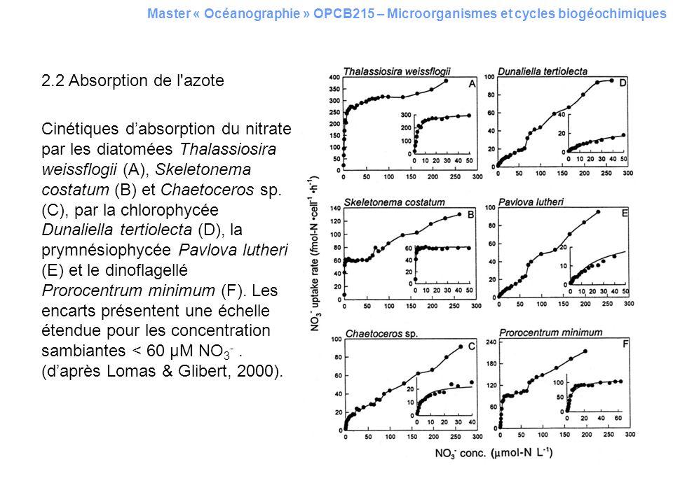 Master « Océanographie » OPCB215 – Microorganismes et cycles biogéochimiques 2.2 Absorption de l'azote Cinétiques dabsorption du nitrate par les diato