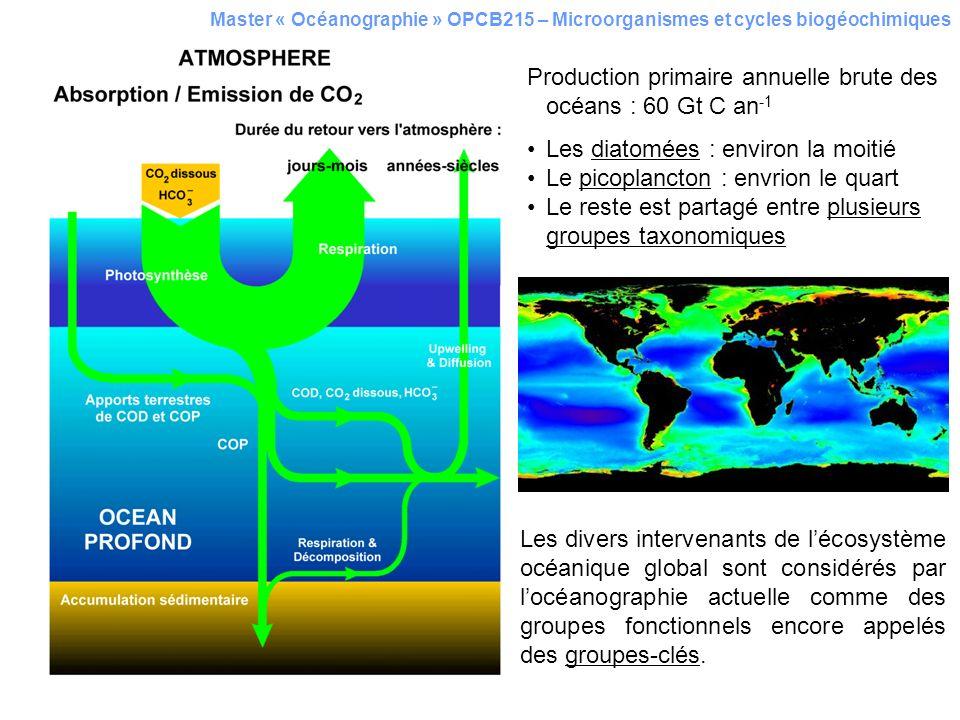 Master « Océanographie » OPCB215 – Microorganismes et cycles biogéochimiques Production primaire annuelle brute des océans : 60 Gt C an -1 Les diatomé