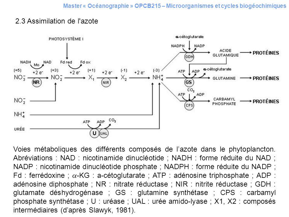 2.3 Assimilation de l'azote Voies métaboliques des différents composés de lazote dans le phytoplancton. Abréviations : NAD : nicotinamide dinucléotide