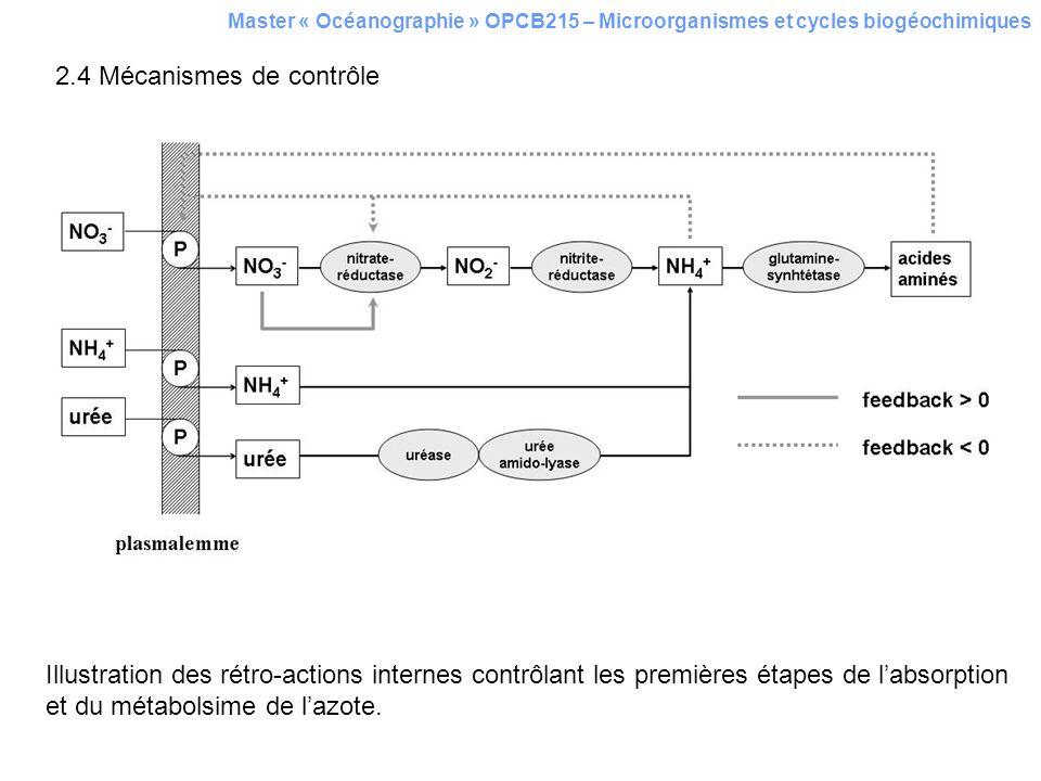 Master « Océanographie » OPCB215 – Microorganismes et cycles biogéochimiques 2.4 Mécanismes de contrôle Illustration des rétro-actions internes contrô
