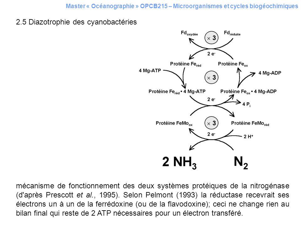 2.5 Diazotrophie des cyanobactéries mécanisme de fonctionnement des deux systèmes protéiques de la nitrogénase (d'après Prescott et al., 1995). Selon