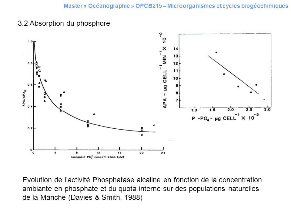 3.2 Absorption du phosphore Master « Océanographie » OPCB215 – Microorganismes et cycles biogéochimiques Evolution de lactivité Phosphatase alcaline e