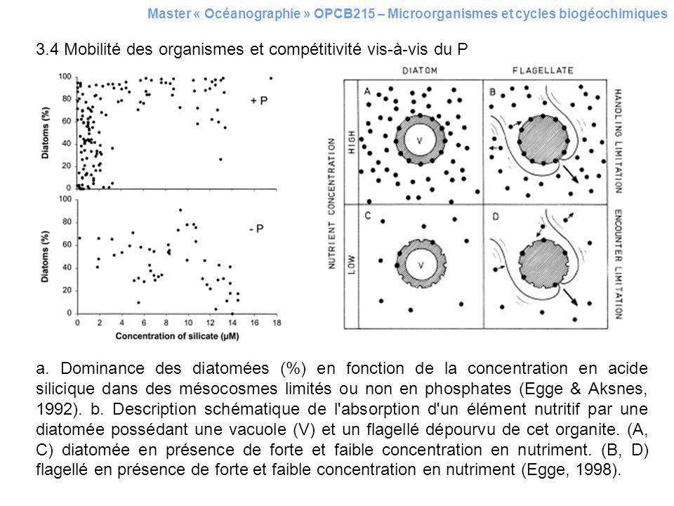 Master « Océanographie » OPCB215 – Microorganismes et cycles biogéochimiques 3.4 Mobilité des organismes et compétitivité vis-à-vis du P a. Dominance