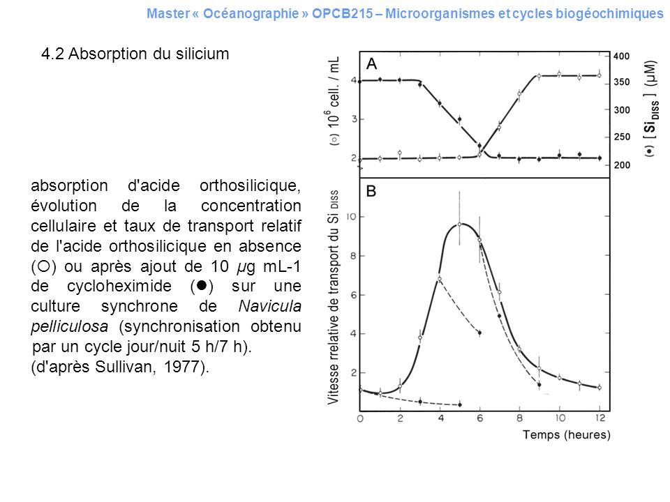 4.2 Absorption du silicium Master « Océanographie » OPCB215 – Microorganismes et cycles biogéochimiques absorption d'acide orthosilicique, évolution d