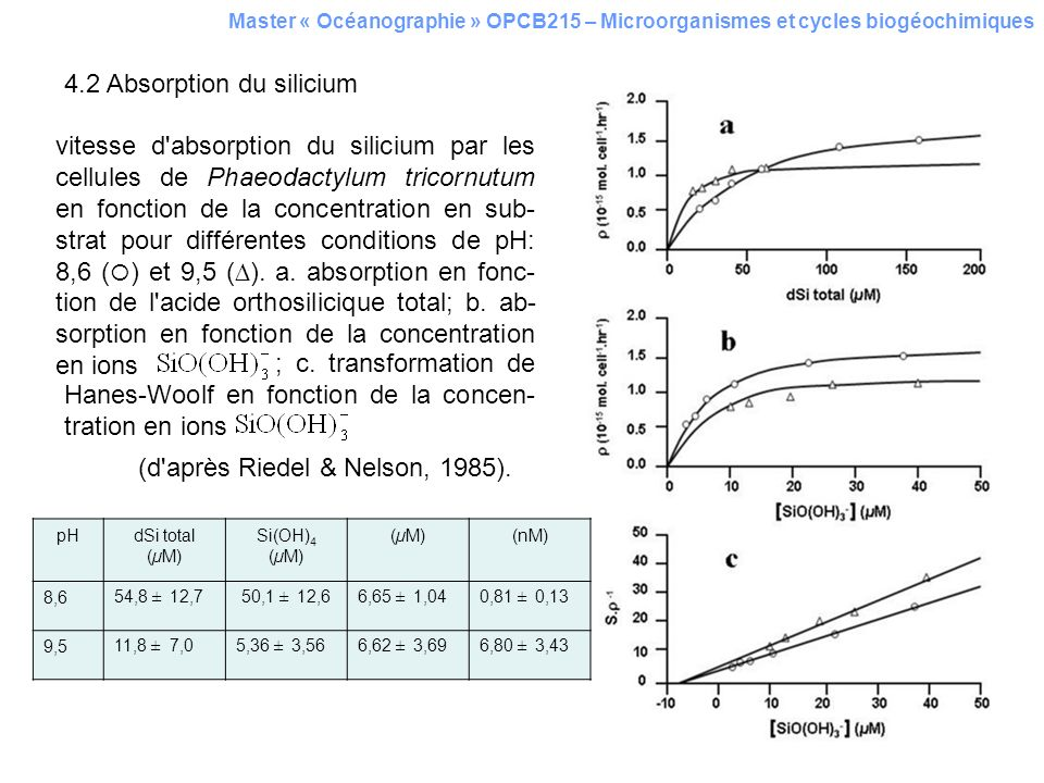 4.2 Absorption du silicium Master « Océanographie » OPCB215 – Microorganismes et cycles biogéochimiques vitesse d'absorption du silicium par les cellu