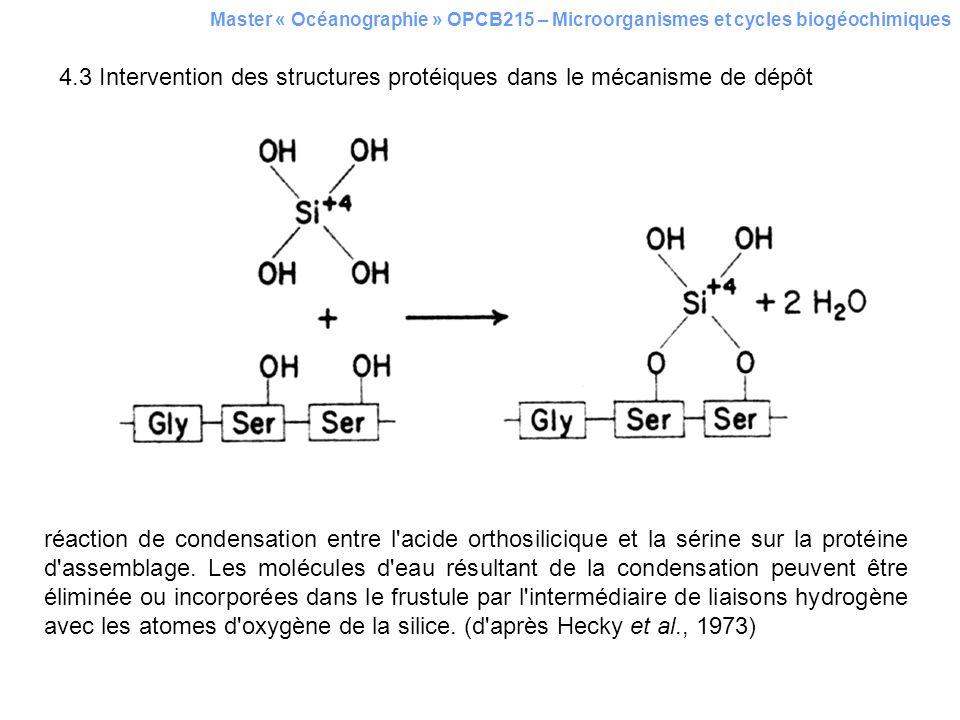 4.3 Intervention des structures protéiques dans le mécanisme de dépôt Master « Océanographie » OPCB215 – Microorganismes et cycles biogéochimiques réa