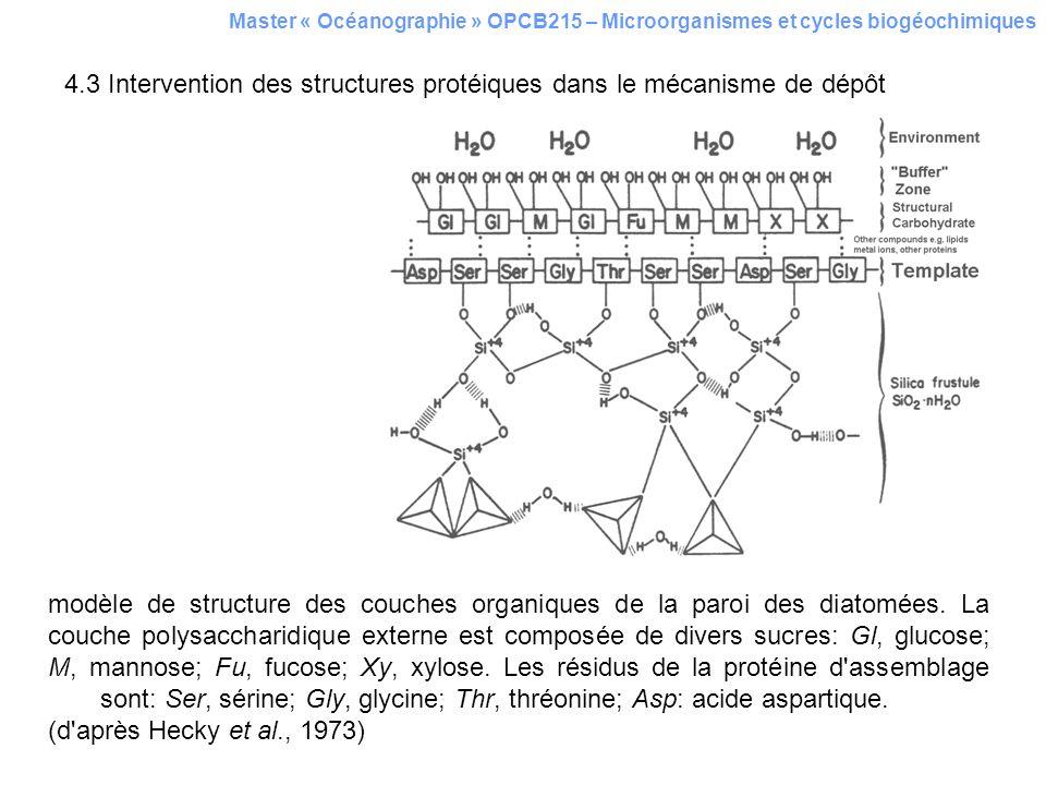 4.3 Intervention des structures protéiques dans le mécanisme de dépôt Master « Océanographie » OPCB215 – Microorganismes et cycles biogéochimiques mod