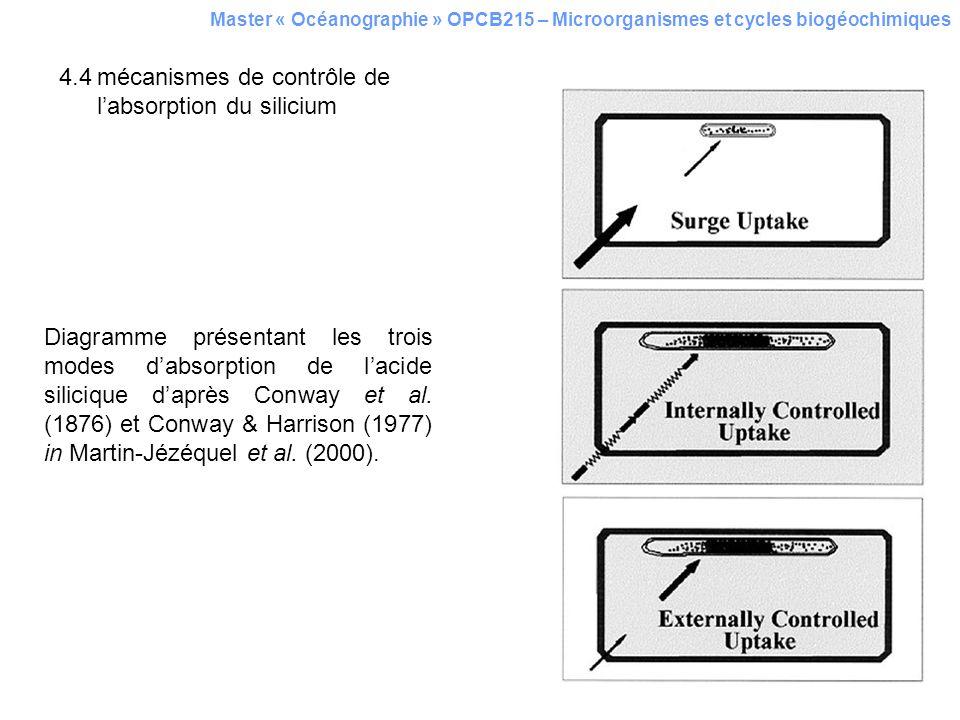 4.4mécanismes de contrôle de labsorption du silicium Master « Océanographie » OPCB215 – Microorganismes et cycles biogéochimiques Diagramme présentant