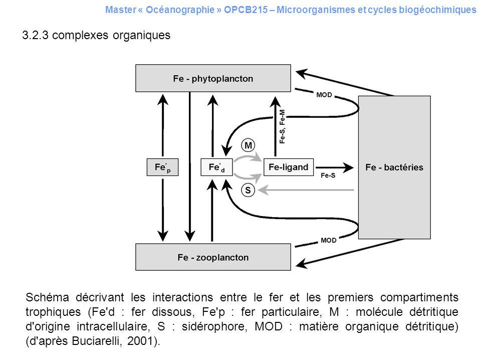 Master « Océanographie » OPCB215 – Microorganismes et cycles biogéochimiques 3.2.3 complexes organiques Schéma décrivant les interactions entre le fer