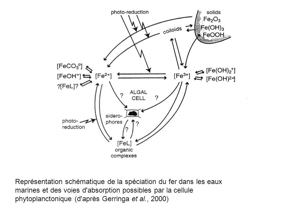 Représentation schématique de la spéciation du fer dans les eaux marines et des voies d'absorption possibles par la cellule phytoplanctonique (d'après