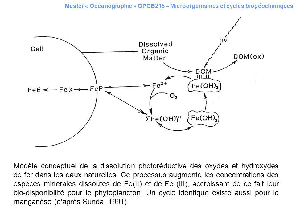 Master « Océanographie » OPCB215 – Microorganismes et cycles biogéochimiques Modèle conceptuel de la dissolution photoréductive des oxydes et hydroxyd