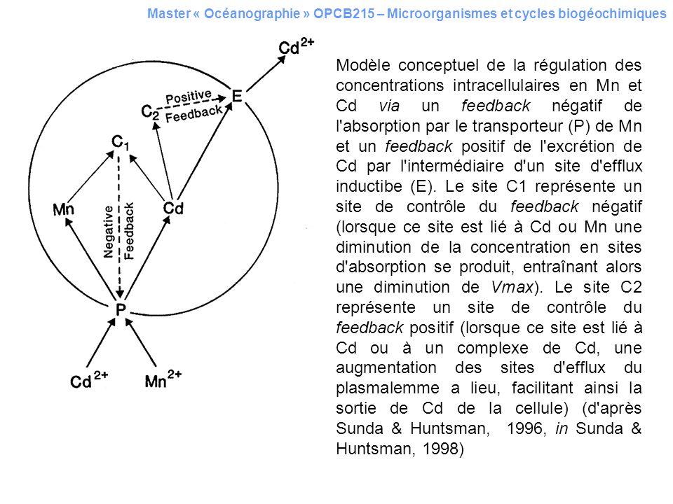 Master « Océanographie » OPCB215 – Microorganismes et cycles biogéochimiques Modèle conceptuel de la régulation des concentrations intracellulaires en