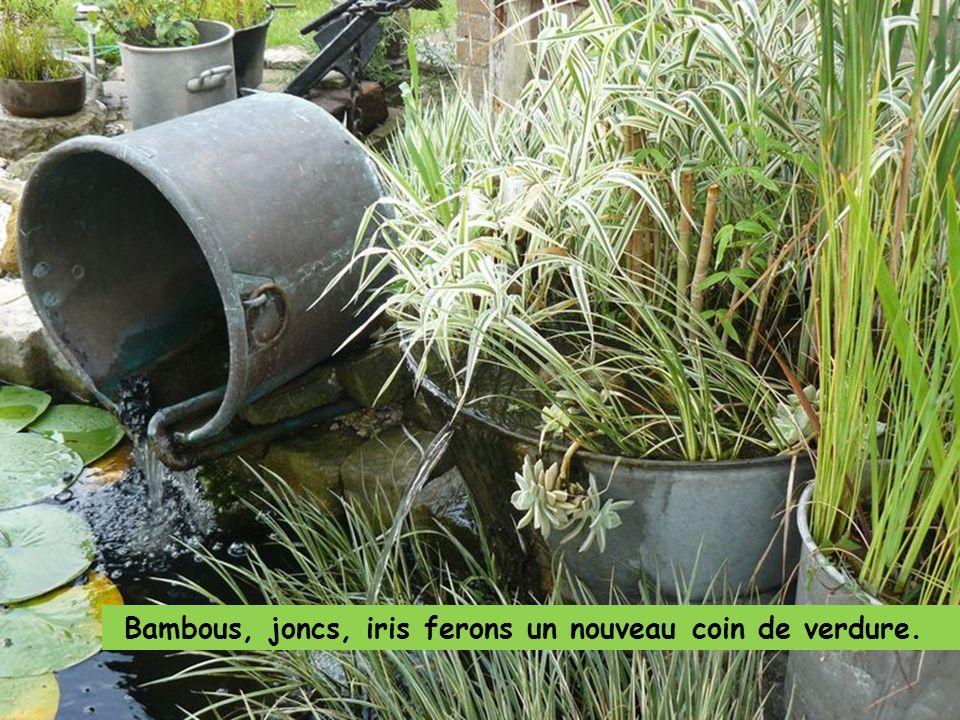 Plantez quelques plantes qui vont se nourrir des impuretés filtrées.