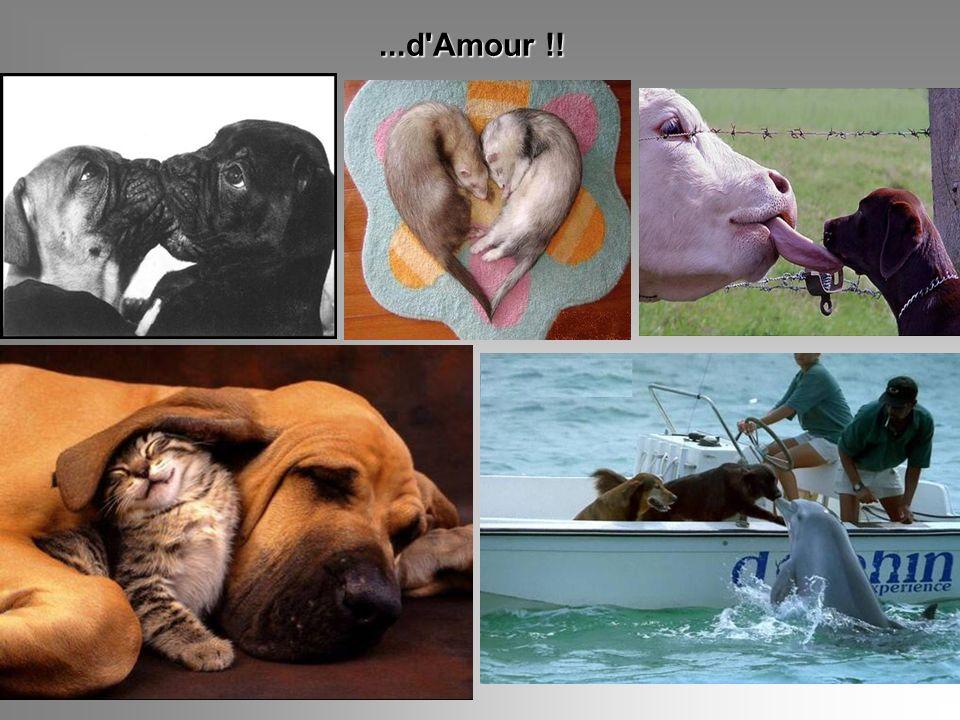 ...d Amour !!