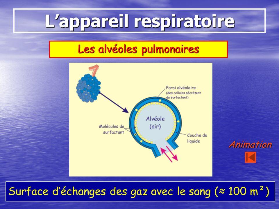 Lappareil respiratoire Les alvéoles pulmonaires Surface déchanges des gaz avec le sang ( 100 m²) Animation