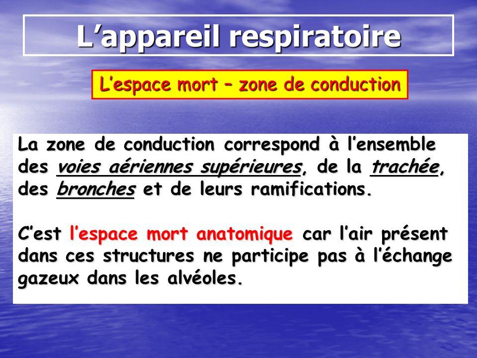 Lappareil respiratoire Lespace mort – zone de conduction La zone de conduction correspond à lensemble des voies aériennes supérieures, de la trachée,