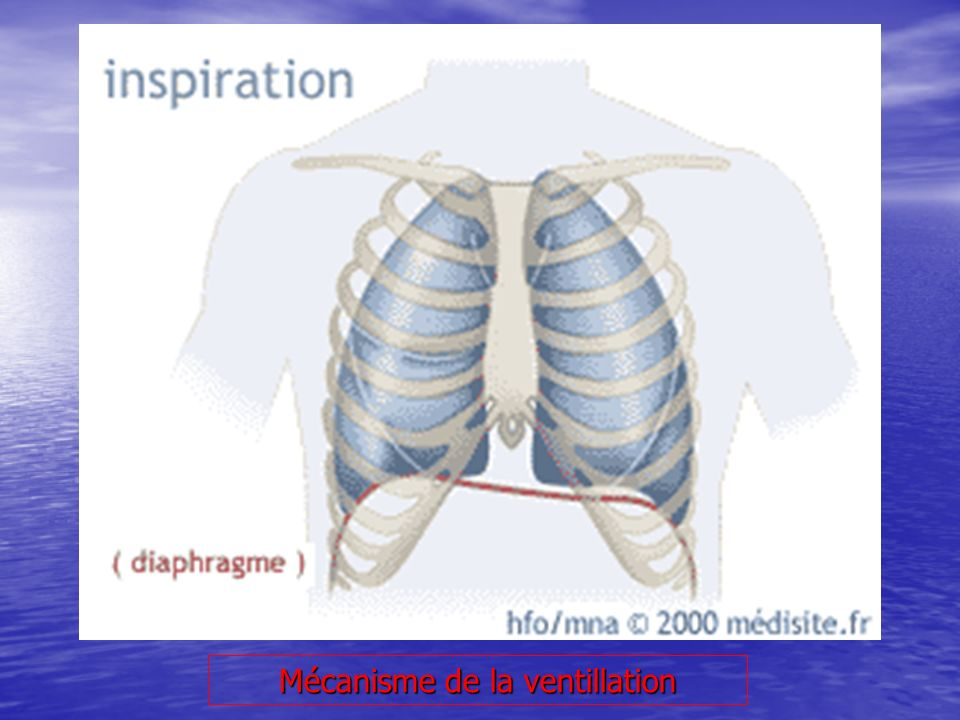Mécanisme de la ventillation