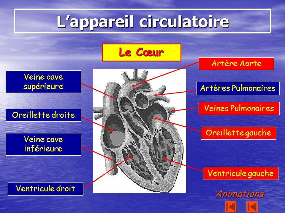 Le Cœur Lappareil circulatoire Oreillette droite Oreillette gauche Ventricule droit Ventricule gauche Veine cave inférieure Veine cave supérieure Artè
