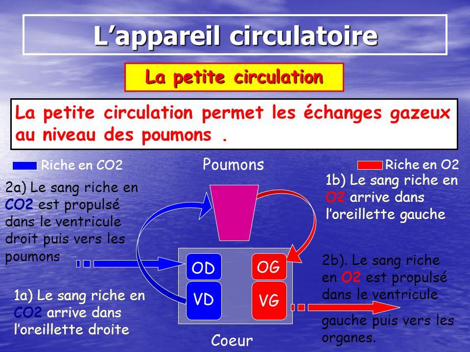 La petite circulation Lappareil circulatoire La petite circulation permet les échanges gazeux au niveau des poumons. OD VD OG VG Poumons Coeur Riche e