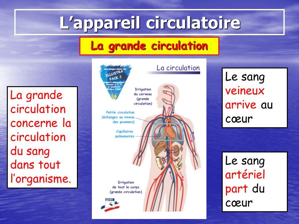 La grande circulation Lappareil circulatoire Le sang veineux arrive au cœur Le sang artériel part du cœur La grande circulation concerne la circulatio