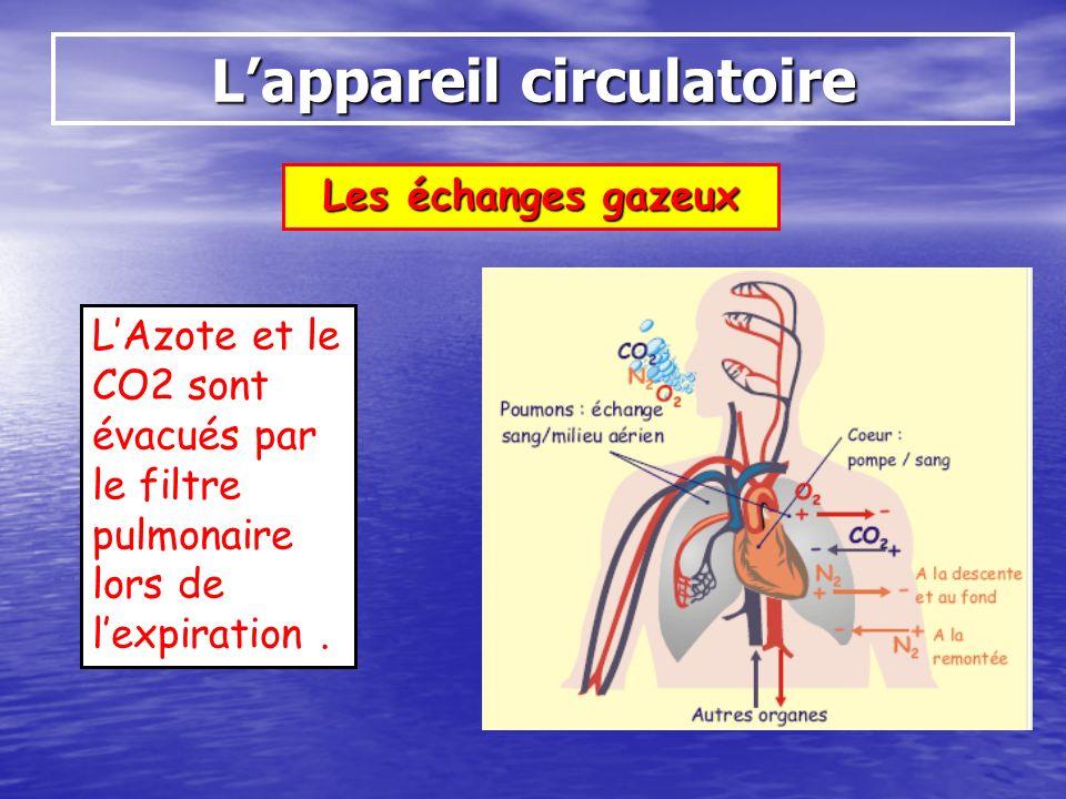 Les échanges gazeux Lappareil circulatoire LAzote et le CO2 sont évacués par le filtre pulmonaire lors de lexpiration.