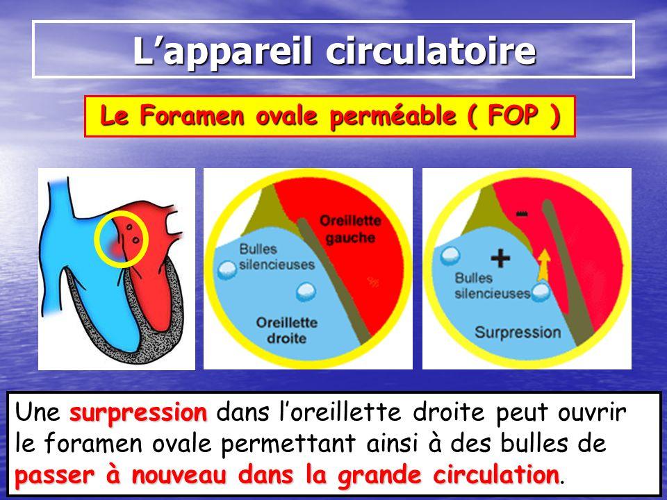 Le Foramen ovale perméable ( FOP ) Lappareil circulatoire surpression passer à nouveau dans la grande circulation Une surpression dans loreillette dro