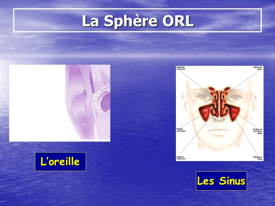 La Sphère ORL Loreille Les Sinus