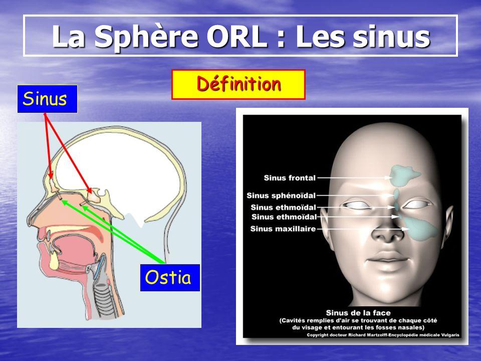 Définition Sinus Ostia