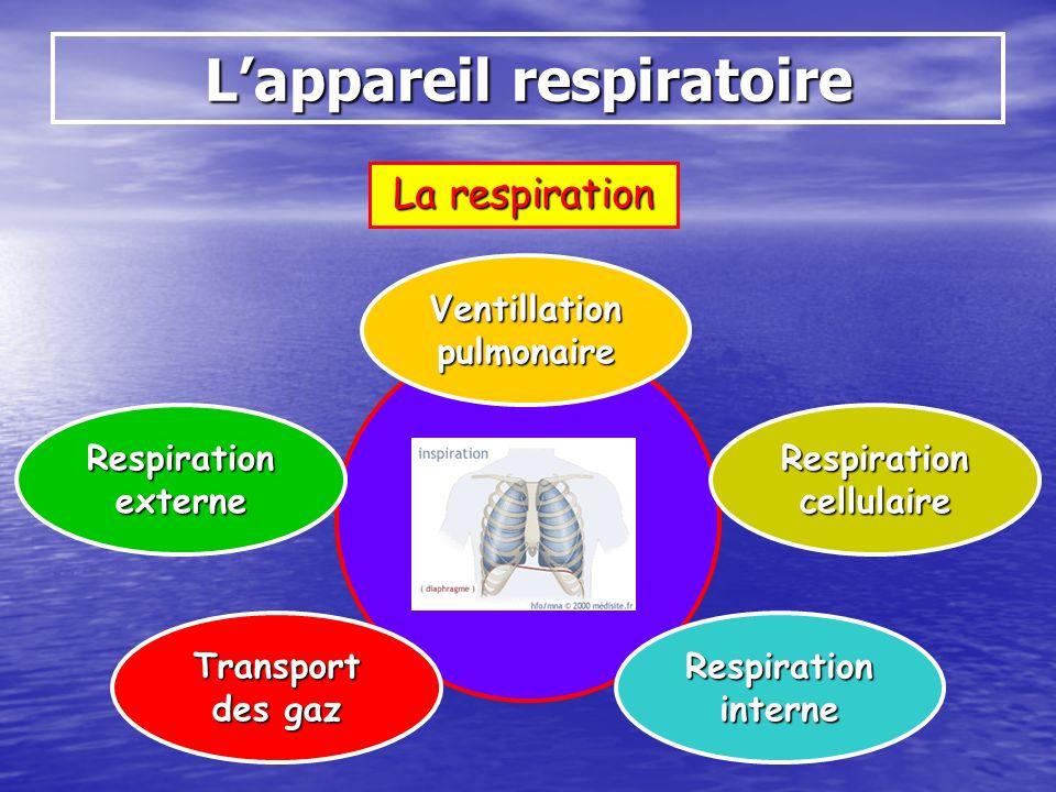 La respiration Lappareil respiratoire Ventillation pulmonaire Respiration interne Respiration externe Transport des gaz Respiration cellulaire