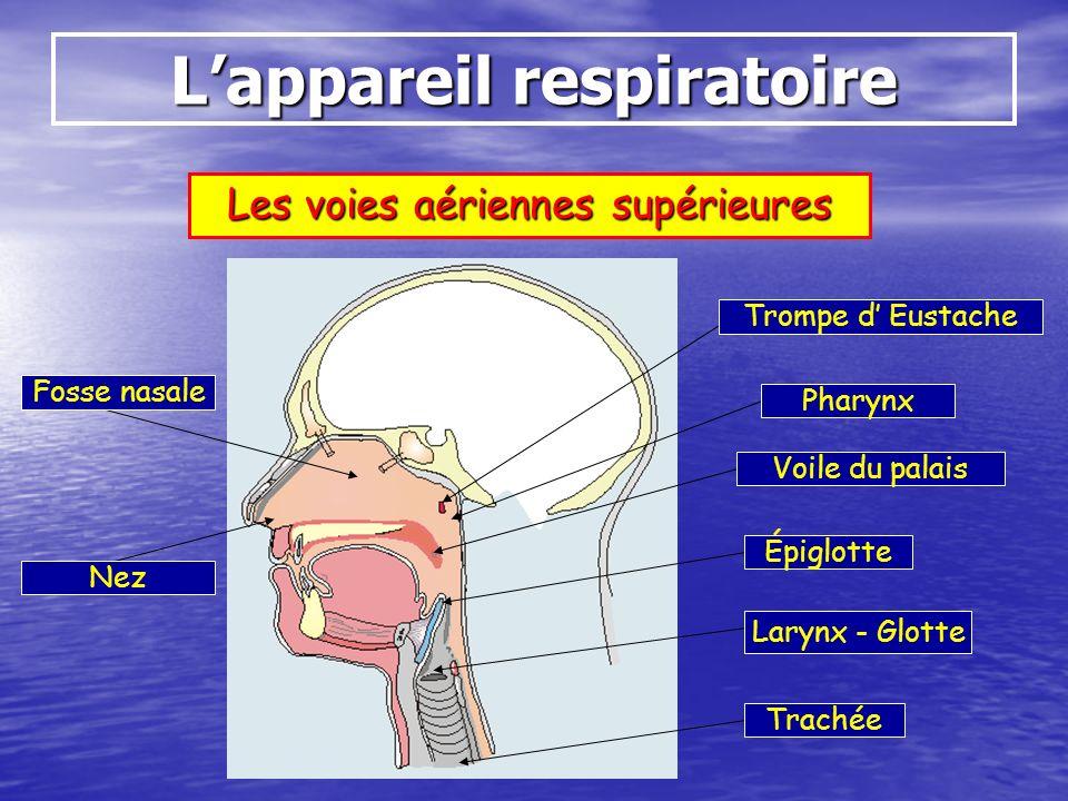 Définitions La Sphère ORL : Loreille Pavillon Conduit auditif Tympan Osselets Trompe dEustache Cochlée Nerf auditif Anneaux semi- circulaires (équilibre) Nerf vestibulaire (équilibre) Animation