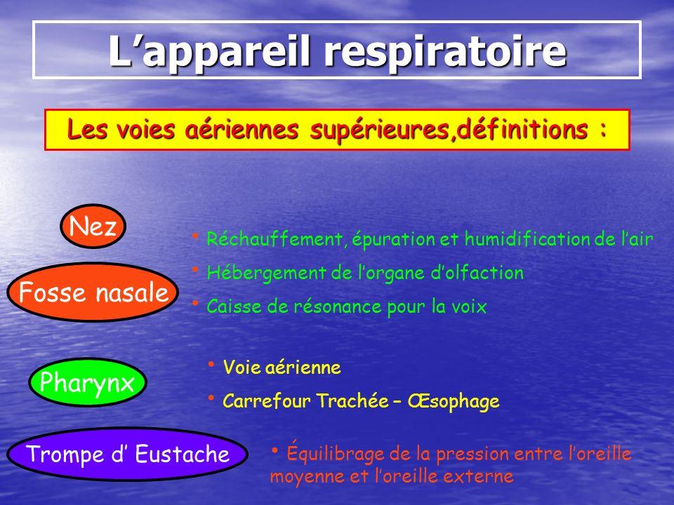 Lappareil respiratoire Les voies aériennes supérieures,définitions : Nez Fosse nasale Pharynx Réchauffement, épuration et humidification de lair Héber