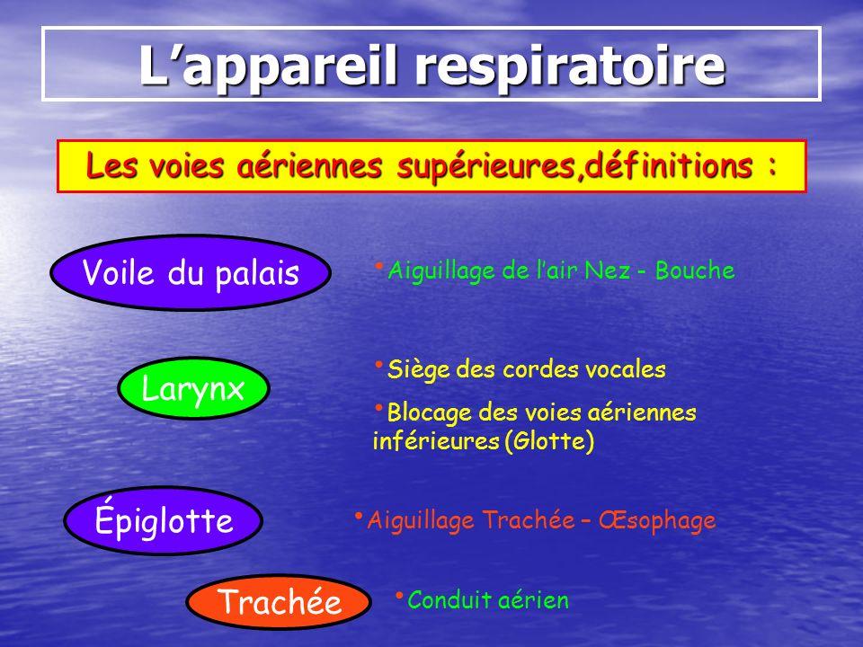 Lappareil respiratoire Les voies aériennes supérieures,définitions : Trachée Voile du palais Larynx Aiguillage de lair Nez - Bouche Siège des cordes v