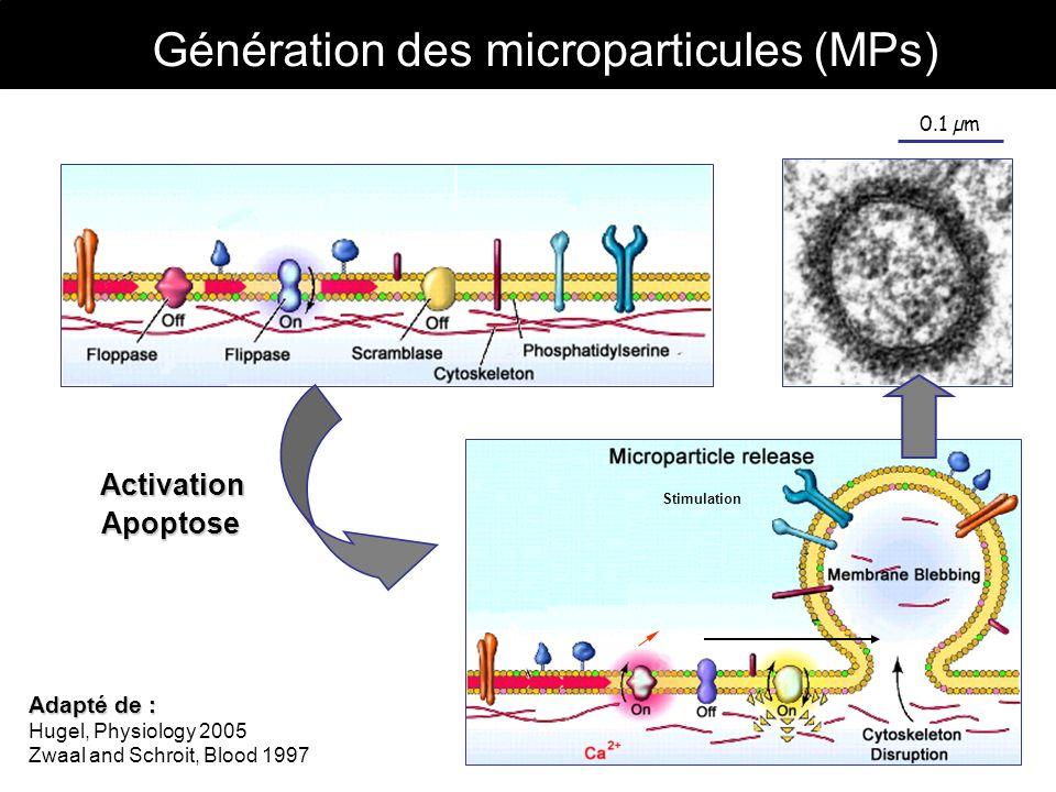 Génération des microparticules (MPs) 0.1 µm Stimulation Activation Adapté de : Hugel, Physiology 2005 Zwaal and Schroit, Blood 1997 Apoptose