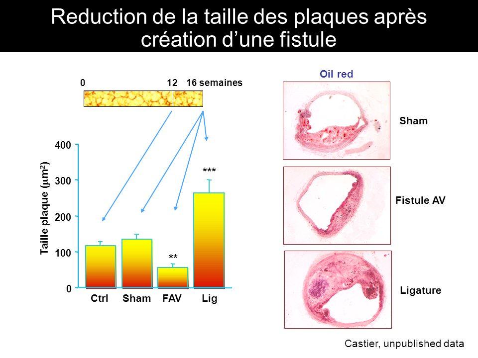 Ligature *** Lig Fistule AV FAV ** 0 100 200 300 400 Reduction de la taille des plaques après création dune fistule Oil red Sham Taille plaque ( m 2 )