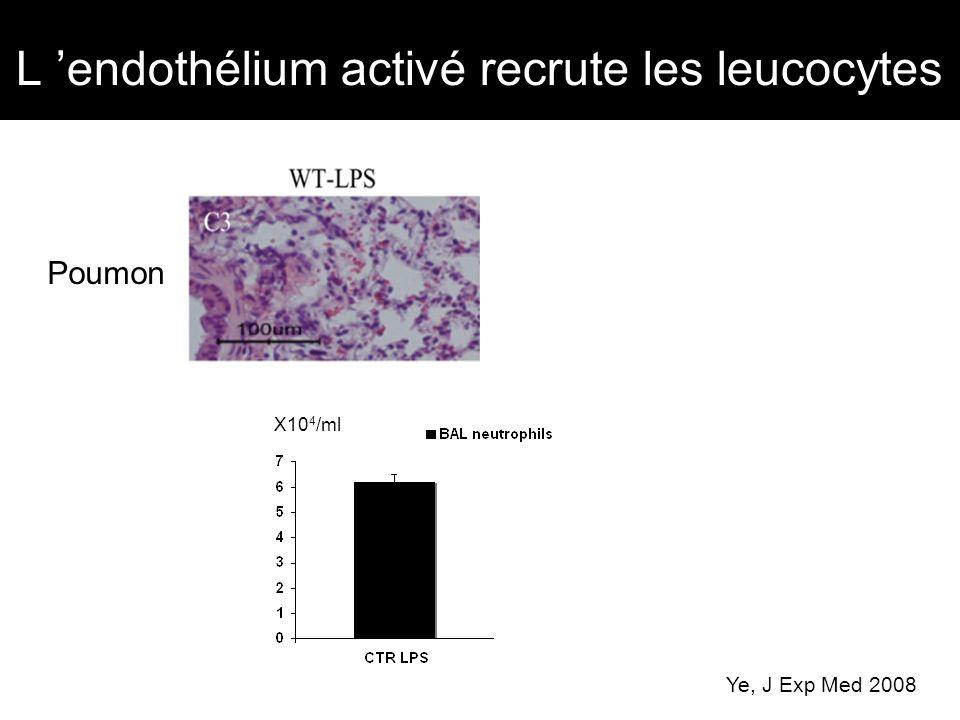 L endothélium activé recrute les leucocytes Poumon Ye, J Exp Med 2008 * X10 4 /ml